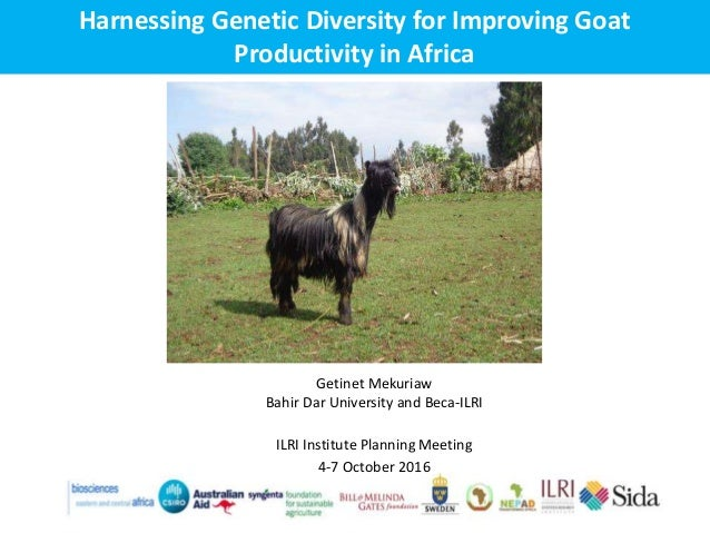 Harnessing Genetic Diversity for Improving Goat Productivity in Africa Getinet Mekuriaw Bahir Dar University and Beca-ILRI...