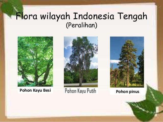 Download 83 Koleksi Gambar Flora Dan Fauna Peralihan