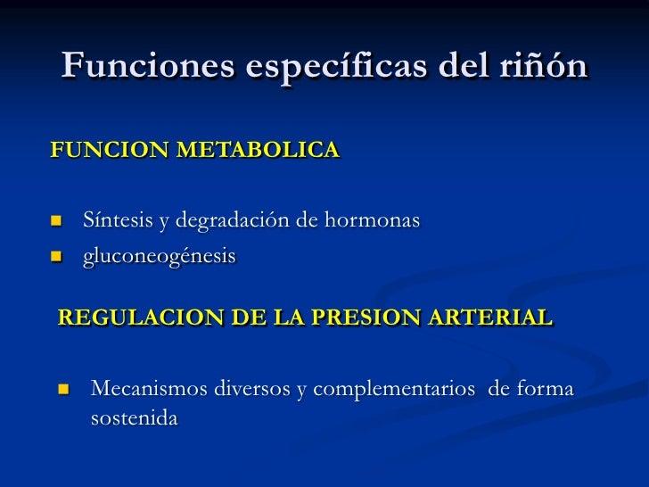 Concentración de orina</li></ul>Cálices menores<br />Papila<br />Pelvis renal<br />Cálices mayores<br />Cápsula<br />Uréte...
