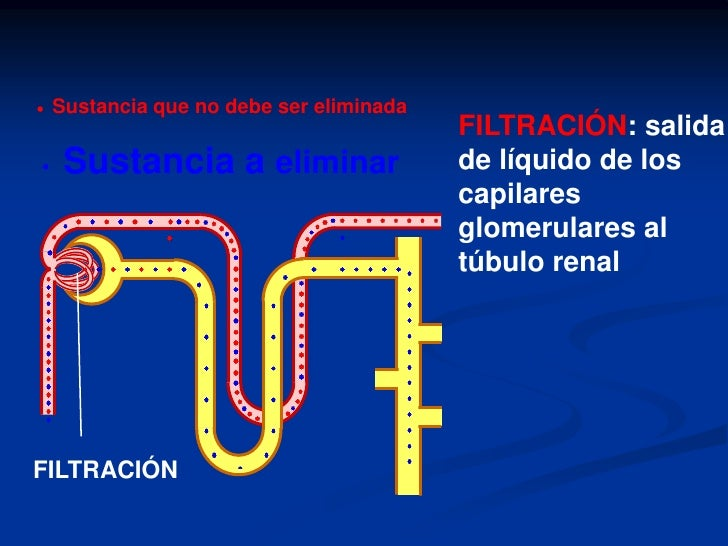 ANATOMIA Y FISIOLOGIA<br />NEFRONA<br />TUBULO  COLECTOR.<br />ADH<br />CAMZ<br />