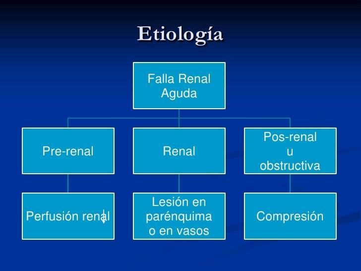 ANATOMIA Y FISIOLOGIA<br />BARRERA  DE  FILTRADO<br />Corpúsculo.<br />GLOMERULO. <br />Cels endoteliales (capilares fenes...