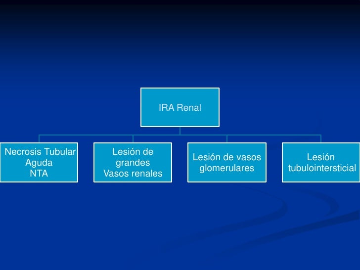Microscopia Electronica<br /> de Barrido<br />Podocito<br />Pedicelos<br />Endotelio fenestrado<br />Membrana Basal<br />M...