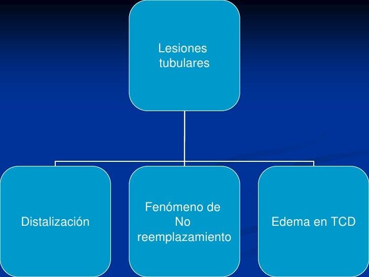 Otras Funciones del Riñón<br /><ul><li>Eritropoyesis