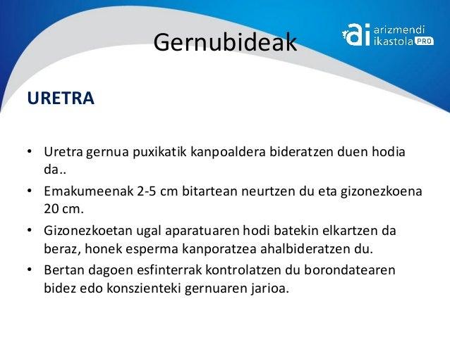 GernubideakURETRA• Uretra gernua puxikatik kanpoaldera bideratzen duen hodia  da..• Emakumeenak 2-5 cm bitartean neurtzen ...