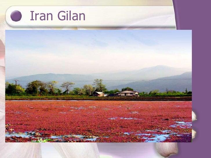 Iran Gilan