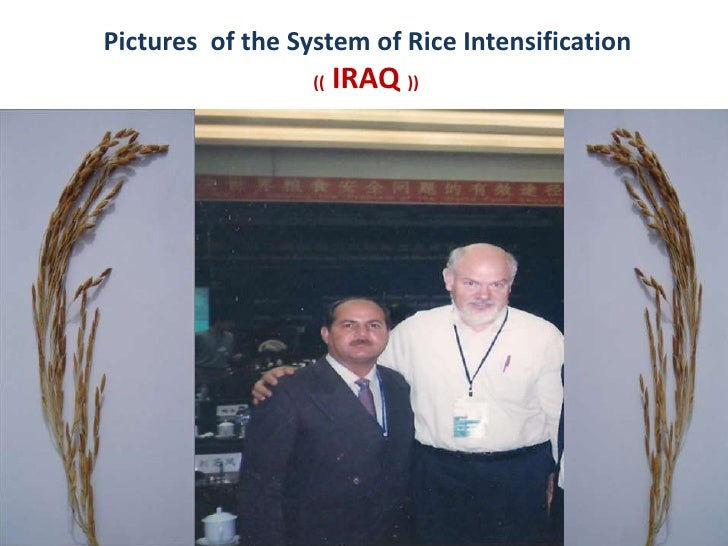 Pictures  of the System of Rice Intensification(( IRAQ ))<br />