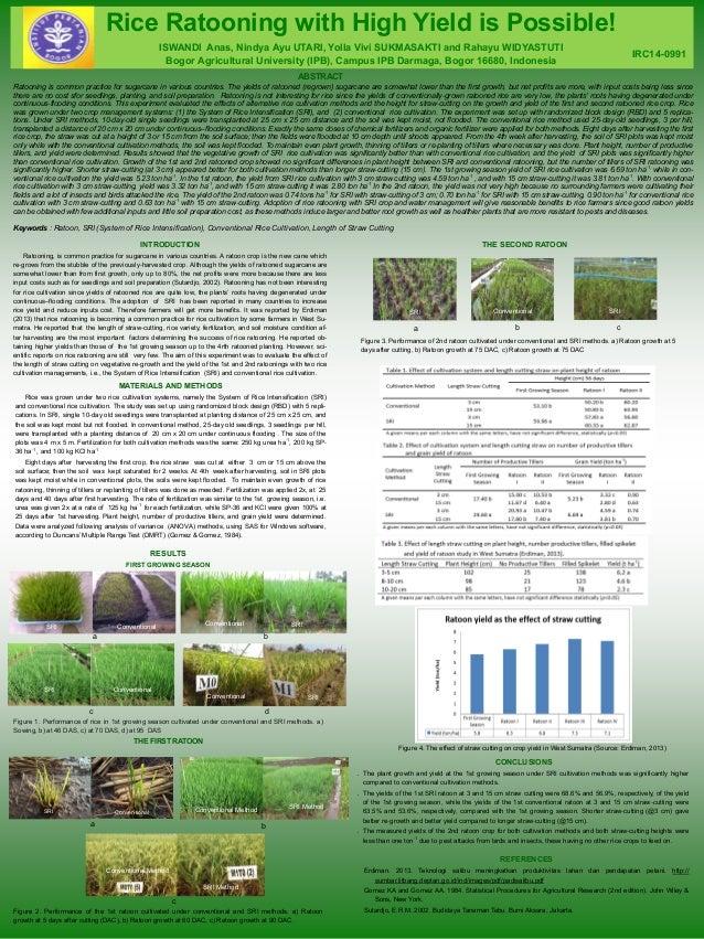Rice Ratooning with High Yield is Possible!  ISWANDI Anas, Nindya Ayu UTARI, Yolla Vivi SUKMASAKTI and Rahayu WIDYASTUTI  ...