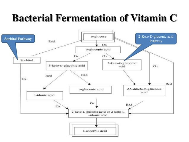 process flow diagram of vitamin c wiring diagram online Diagram of Fat