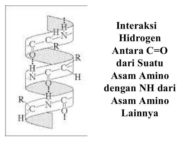 Irfan bahan kuliah asam amino