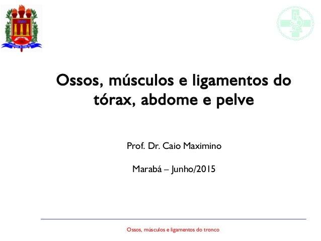 Ossos, músculos e ligamentos do tronco Ossos, músculos e ligamentos do tórax, abdome e pelve Prof. Dr. Caio Maximino Marab...