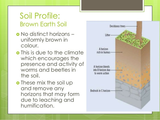 Characteristics of Brown Earth Soils