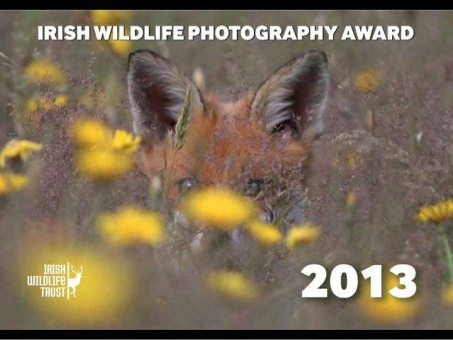 Irish Wildlife Photographer of the Year -  IWT Calendar 2013