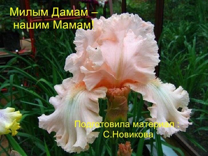 Милым Дамам – нашим Мамам! Подготовила материал :  С.Новикова