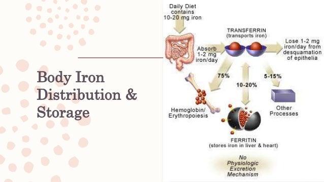 Iron Deficiency Spectrum Iron stores Iron transport Functional iron serum ferritin conc. transferrin saturation erthryocyt...