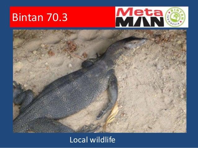 Bintan 70.3          Preparation