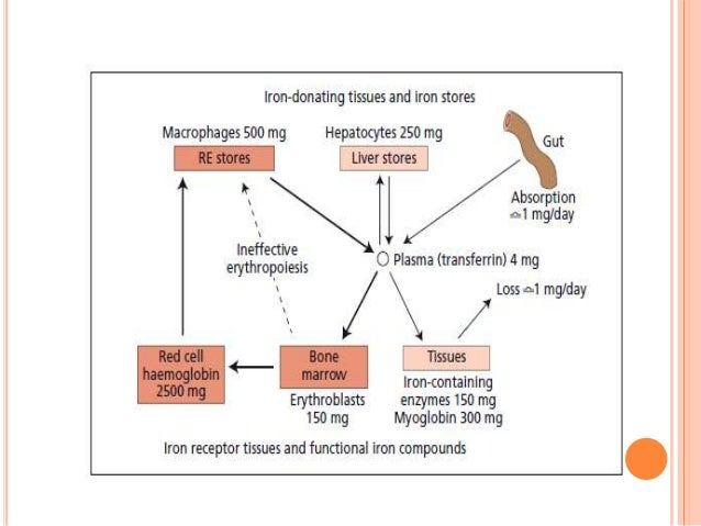 Wu Chunmei Anemia due to Impaired Iron Metabolism. - ppt download