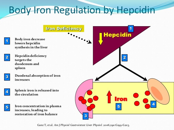 iron overload The liver, a major site of body iron stores, mediates key responses that preserve  systemic iron homeostasis in this issue of the jci, guo et al.