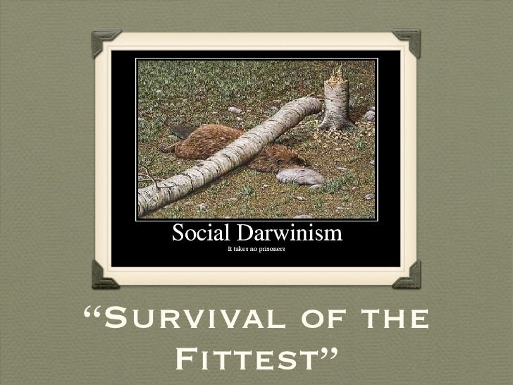 """"""" Survival of the Fittest"""""""