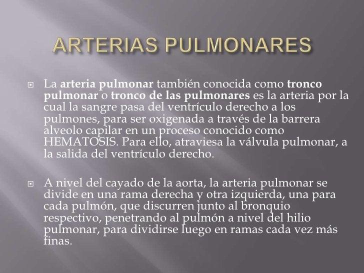 ARTERIAS PULMONARES<br />La arteria pulmonar también conocida como tronco pulmonar o tronco de las pulmonares es la arteri...