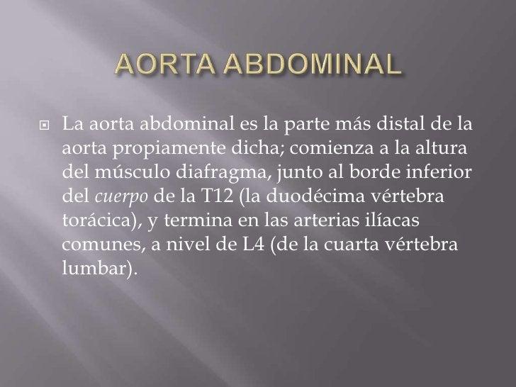 AORTA ABDOMINAL<br />La aorta abdominal es la parte más distal de la aorta propiamente dicha; comienza a la altura del mús...
