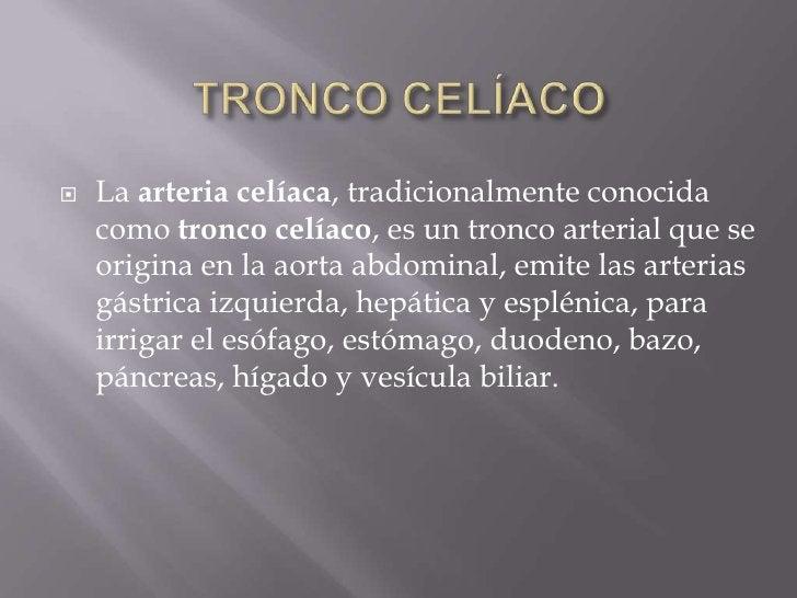 TRONCO CELÍACO<br />La arteria celíaca, tradicionalmente conocida como tronco celíaco, es un tronco arterial que se origin...