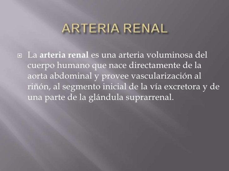 ARTERIA RENAL<br />La arteria renal es una arteria voluminosa del cuerpo humano que nace directamente de la aorta abdomina...