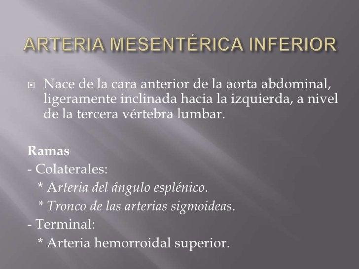 ARTERIA MESENTÉRICA INFERIOR<br />Nace de la cara anterior de la aorta abdominal, ligeramente inclinada hacia la izquierda...