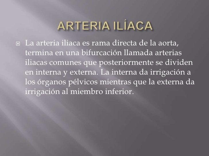 ARTERIA ILÍACA<br />La arteria iliaca es rama directa de la aorta, termina en una bifurcación llamada arterias iliacas com...
