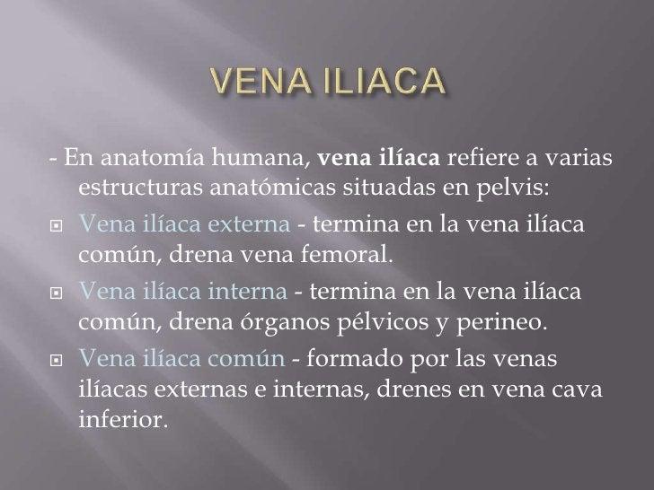 VENA ILIACA<br />- Enanatomía humana,vena ilíacarefiere a varias estructuras anatómicas situadas enpelvis:<br />Vena i...