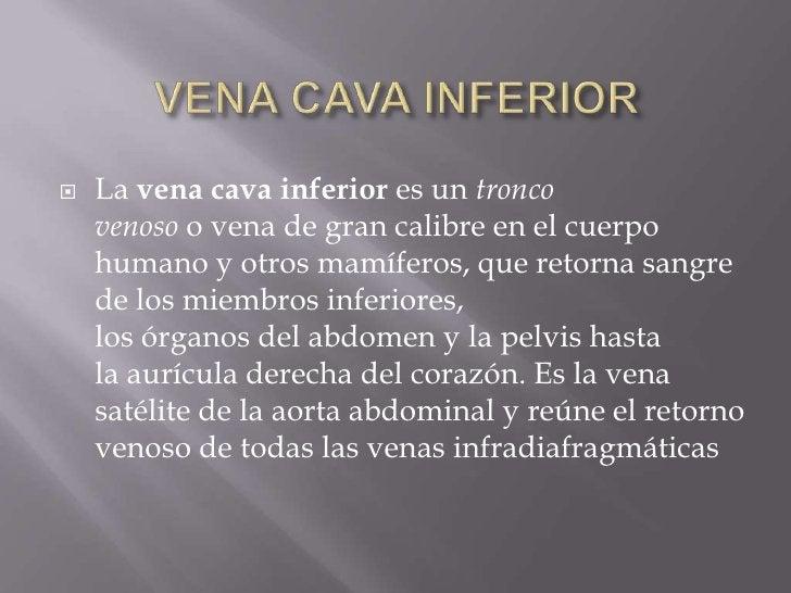VENA CAVA INFERIOR<br />Lavena cava inferiores untronco venosoovenade gran calibre en elcuerpo humanoy otrosmamíf...