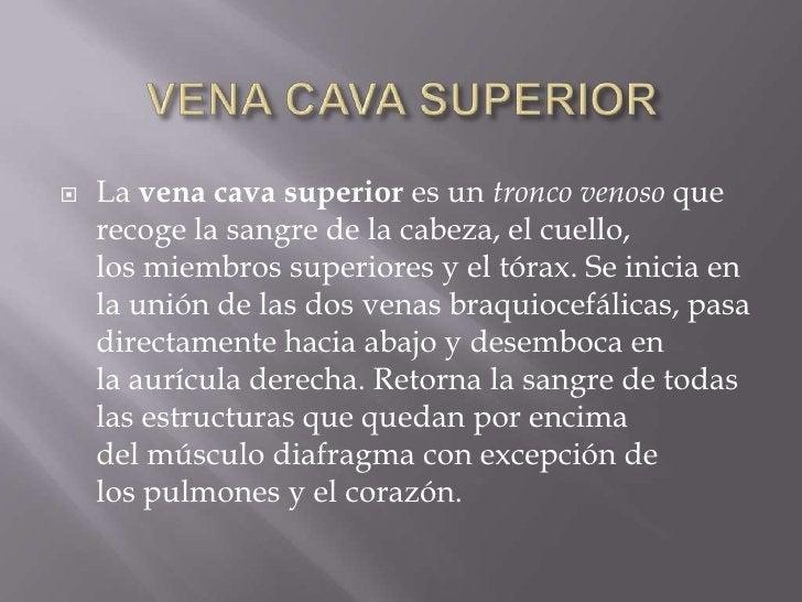 VENA CAVA SUPERIOR<br />Lavena cava superiores untronco venosoque recoge lasangrede lacabeza, elcuello, losmiembr...