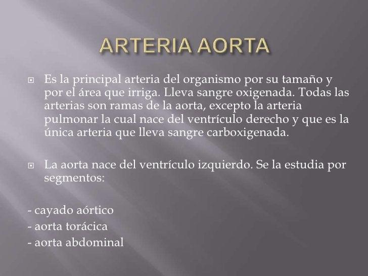 ARTERIA AORTA<br />Es la principal arteria del organismo por su tamaño y por el área que irriga. Lleva sangre oxigenada. T...