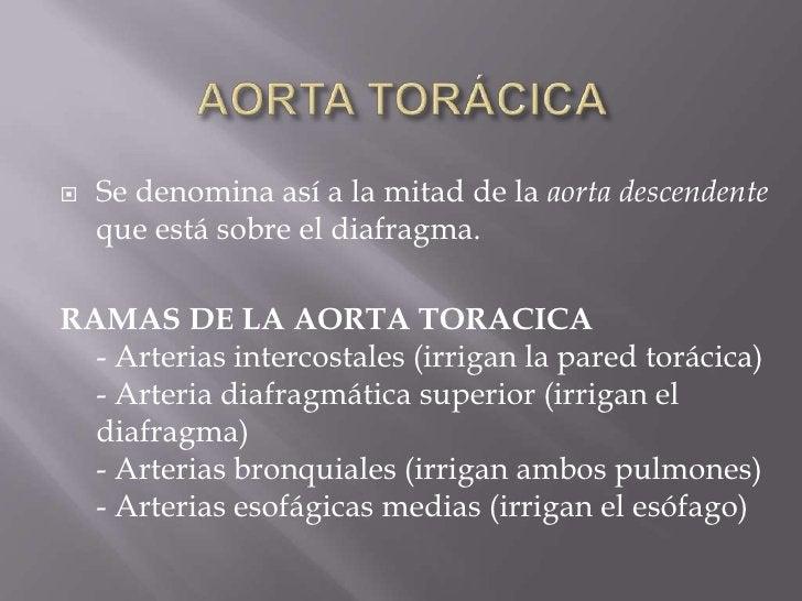 AORTA TORÁCICA<br />Se denomina así a la mitad de la aorta descendente que está sobre el diafragma.<br />RAMAS DE LA AORTA...