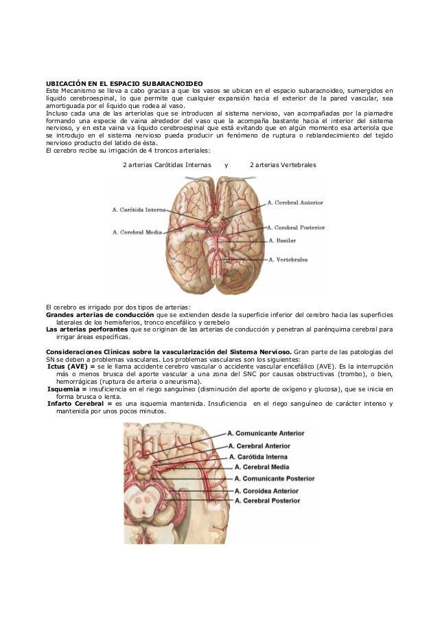 Irrigación arterial y venosa del cerebro y médula