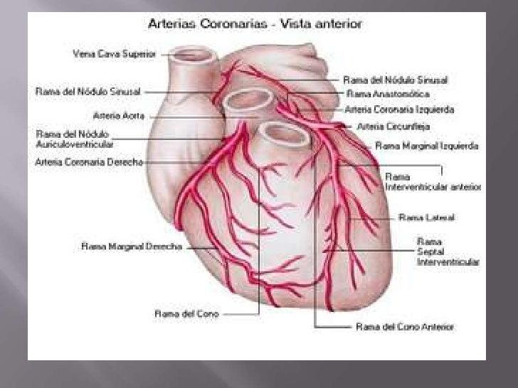 Irrigación del corazon