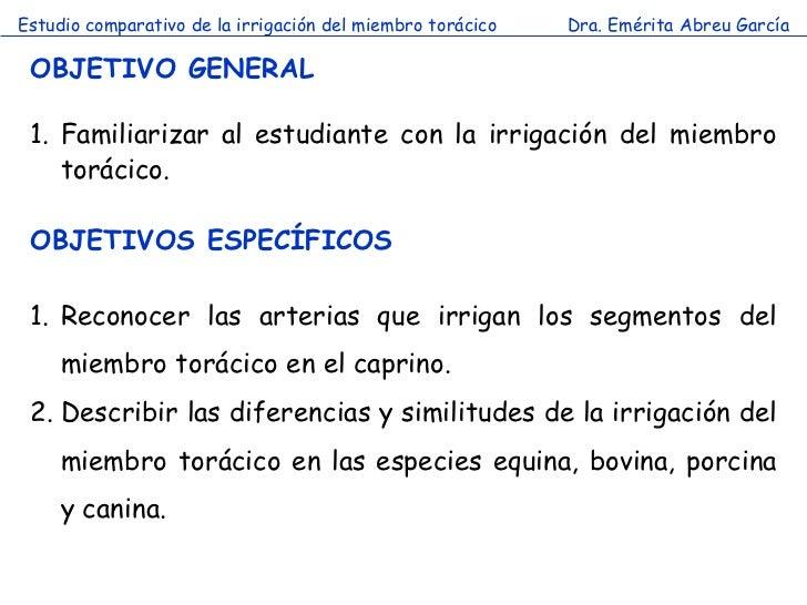 Estudio comparativo de la irrigación del miembro torácico   Dra. Emérita Abreu García OBJETIVO GENERAL 1. Familiarizar al ...