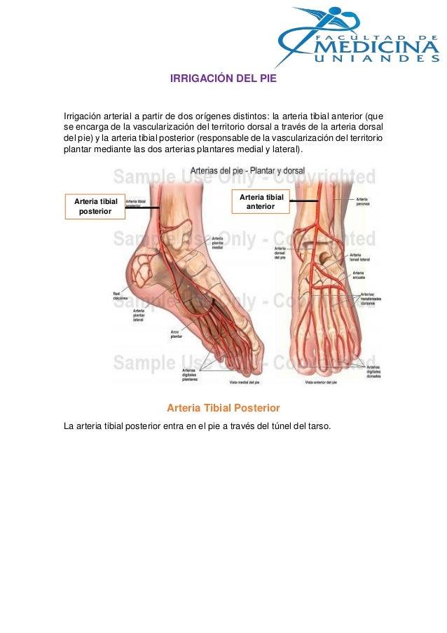 Irrigacion de la mano y del pie