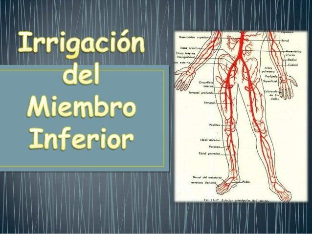 Femoral ComúnIlíaca primitivaIlíaca interna Ilíaca ExternaIRRIGACIÓNGlúteas (Sup-Inf)Pudenda InternaObturatrizFemoral Supe...