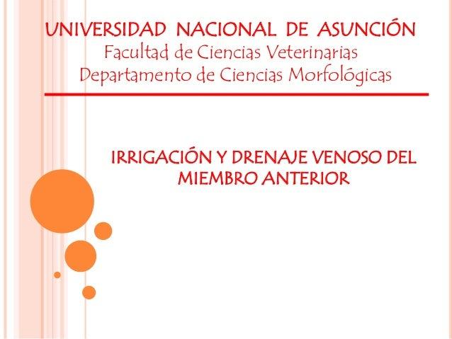 IRRIGACIÓN Y DRENAJE VENOSO DEL MIEMBRO ANTERIOR UNIVERSIDAD NACIONAL DE ASUNCIÓN Facultad de Ciencias Veterinarias Depart...