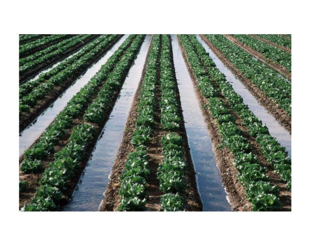 different types of irrigation pdf