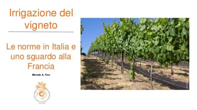 Irrigazione Del Vigneto Le Norme In Italia E Uno Sguardo