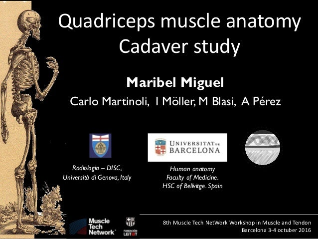 isabel miguel: quadriceps muscle anatomy cadaver study - prp, Muscles
