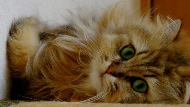 Best Cute Animals Photos