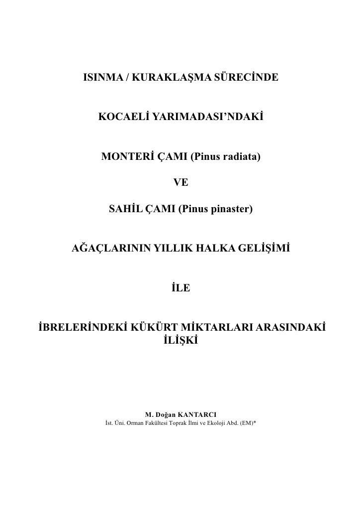 ISINMA / KURAKLAŞMA SÜRECİNDE        KOCAELİ YARIMADASI'NDAKİ         MONTERİ ÇAMI (Pinus radiata)                        ...