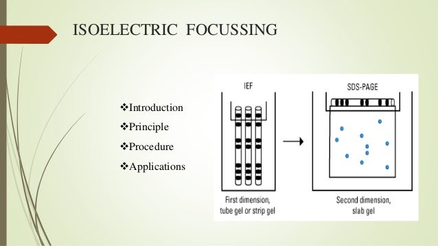 isoelectric focussing In isoelectric focusing, proteins are separated by electrophoresis in a ph gradient based on their isoelectric point(pl) a ph gradient is generated in the gel and an.