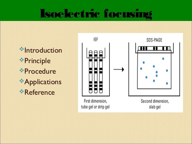 Isoelectric focusing Introduction Principle Procedure Applications Reference