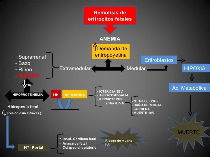 Hemolisis de eritrocitos fetales ANEMIA Demanda de eritropoyetina Medular  Extramedular  Eritroblastos  HIPOXIA  MUERTE Ac...