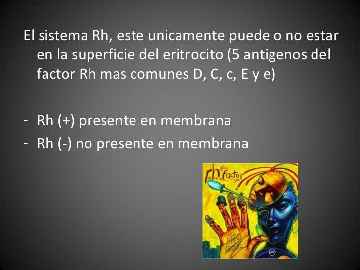 <ul><li>El sistema Rh, este unicamente puede o no estar en la superficie del eritrocito (5 antigenos del factor Rh mas com...
