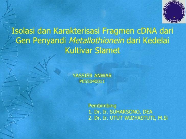 Isolasi dan Karakterisasi Fragmen cDNA dari Gen Penyandi  Metallothionein  dari Kedelai Kultivar Slamet YASSIER ANWAR P055...