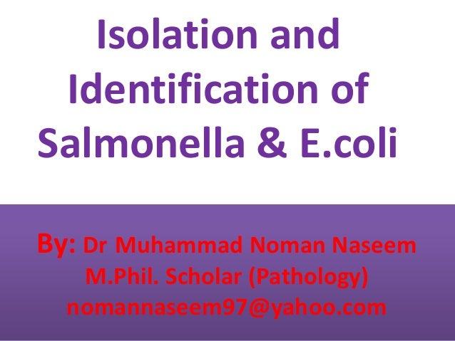 By: Dr Muhammad Noman Naseem M.Phil. Scholar (Pathology) nomannaseem97@yahoo.com Isolation and Identification of Salmonell...